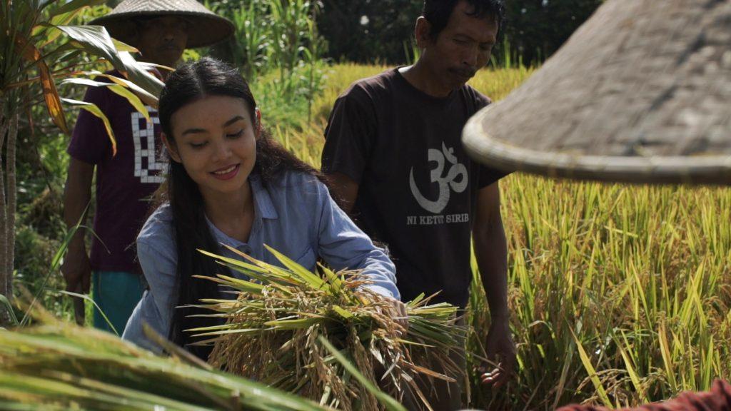 worldheritage-subak-harvesting2