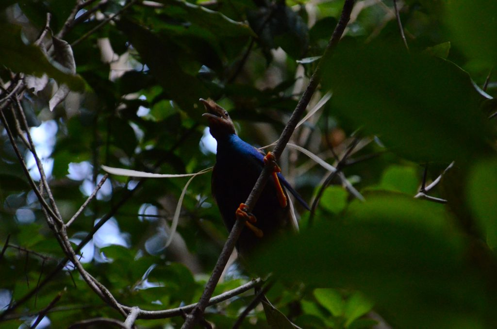 explore-bird-of-paradise