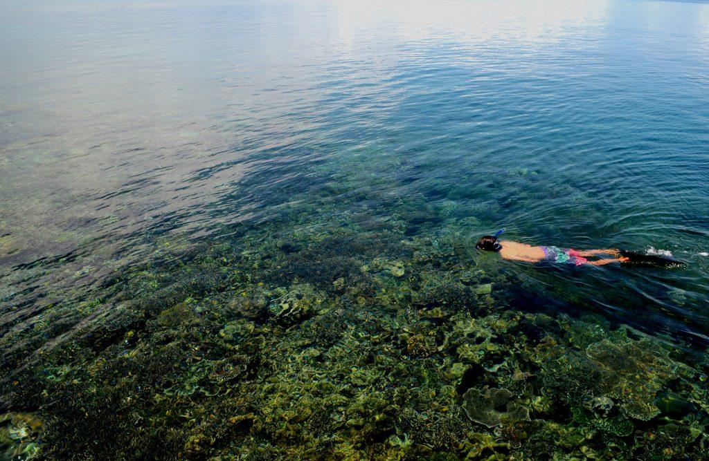 explore-rajaampat-corals