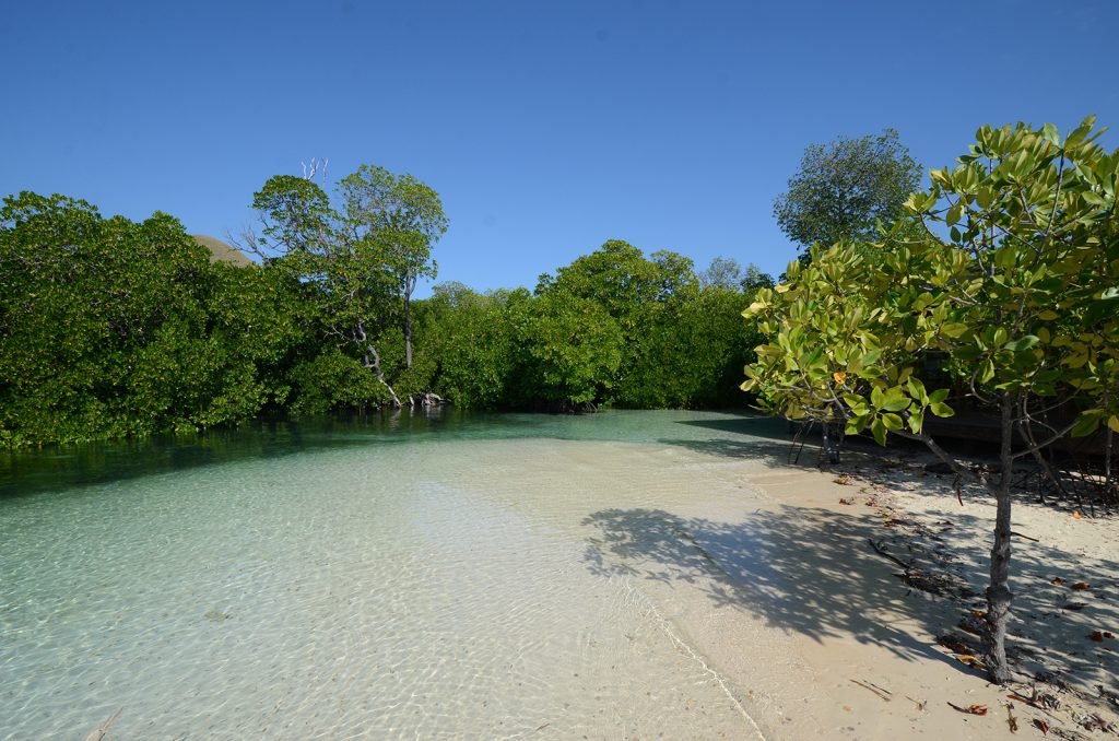 komodo-mangrove-forest