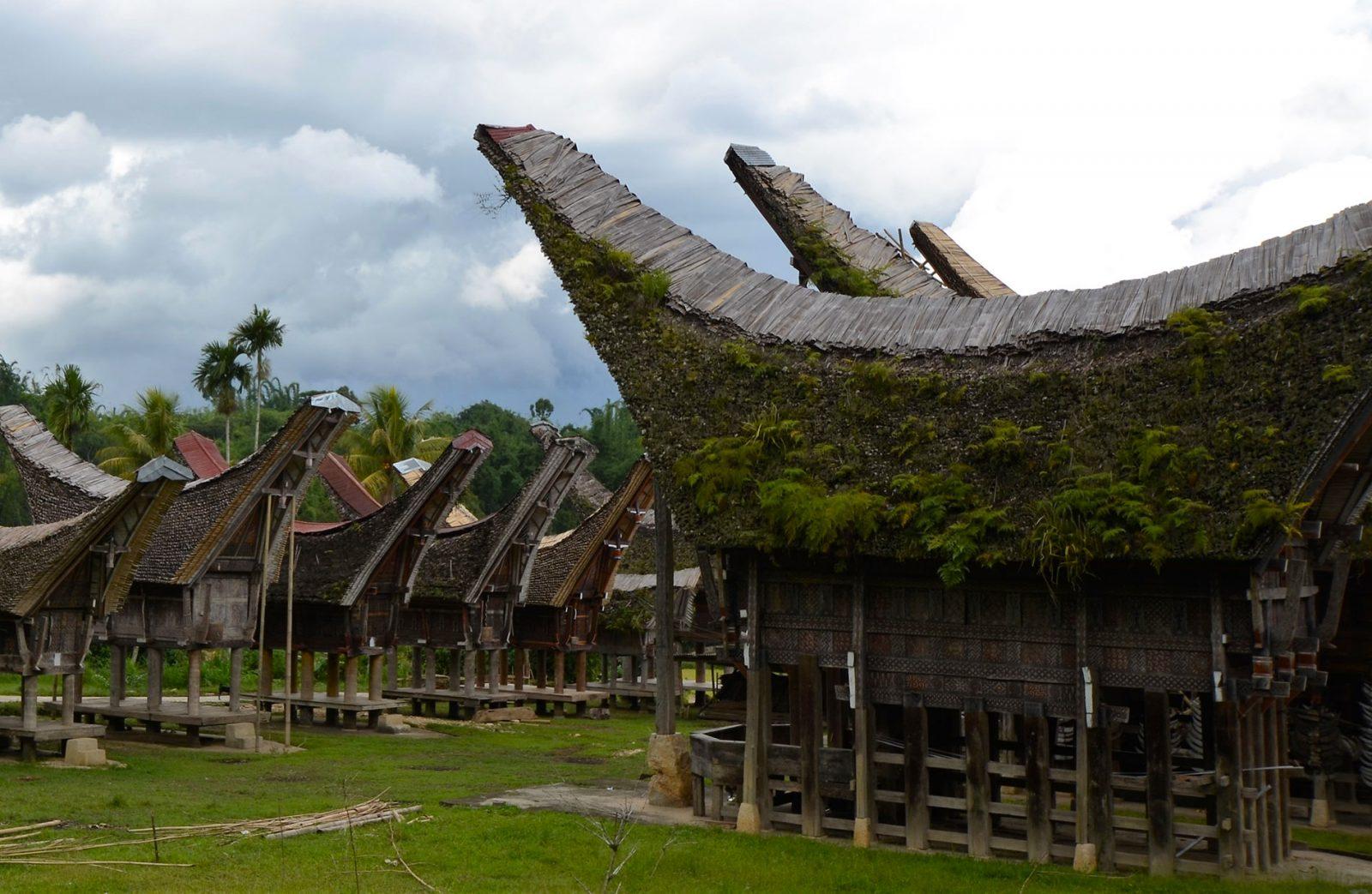 【スラウェシ島】トラジャ族、生死の宇宙観を肌で感じ、幻の珈琲を求め5日間の旅